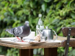 Poznajmy skuteczne sposoby jak odstraszyć gołębie z balkonu?