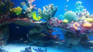 Oceanarium Międzyzdroje – czy warto je odwiedzić?