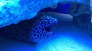 Oceanarium Kielce – dlaczego warto je odwiedzić?