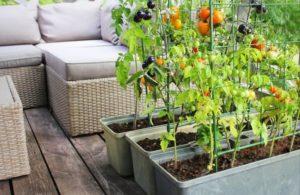 Jak zaplanować pierwszy warzywniak na balkonie?