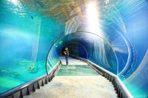 Oceanarium Wrocław – to miejsce, które trzeba zobaczyć!
