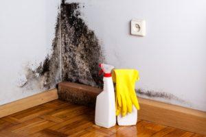 Grzyb i pleśń na ścianie – przyczyny i usuwanie