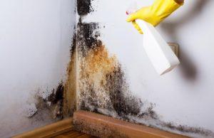 Jak pozbyć się grzyba ze ściany – sprawdzone sposoby