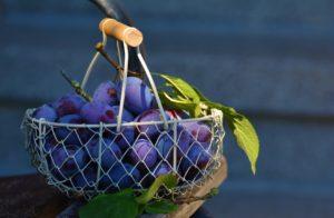 Jaki koszyk na owoce wybrać?